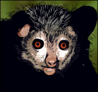 An Aye-aye, a boggle-eyed mammal from Madagascar