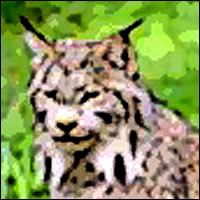 A lynx.