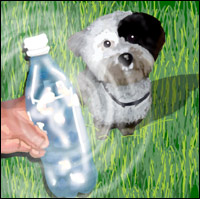 A puppy is dazzled by the sound of a 'magic bottle'.