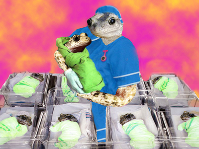Toad midwife with baby toads in blankets