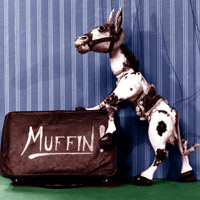 A string-controlled horse puppet called Muffin.