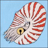 An illustration of a Nautilus.