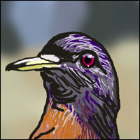 A passenger pigeon - stuffed.