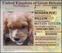 A puppy stares out from the photograph on a pet passport.