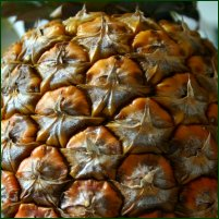 A pineapple, in close-up.