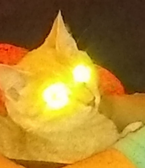Cat with Laser Eyes by Amy P