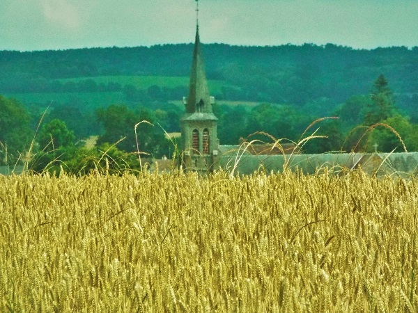 A field of grain, a church steeple, and green hills beyond.