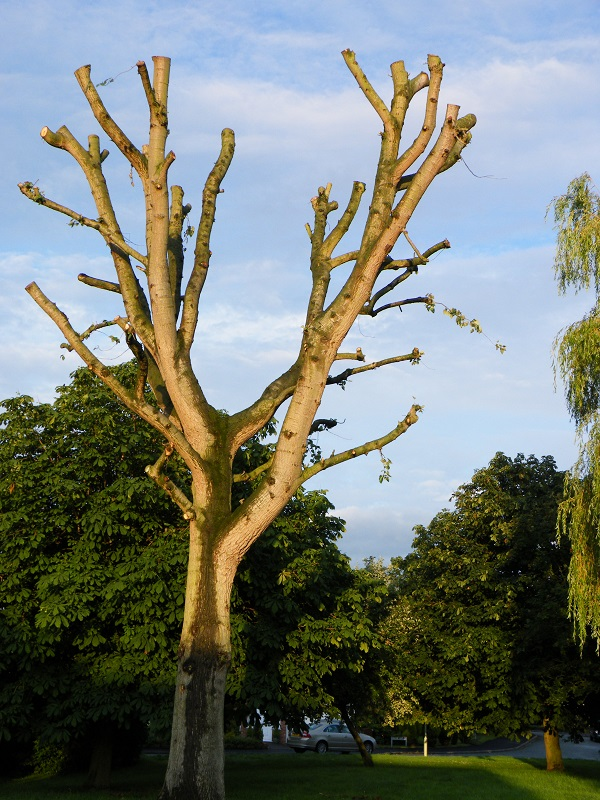 Tree Ready for New Growth by bobstafford