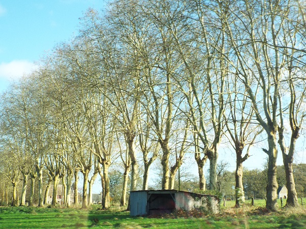Shack and Row of Trees by  bobstafford