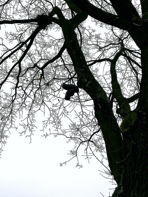 Shoe Tree by Caiman Raptor Elk