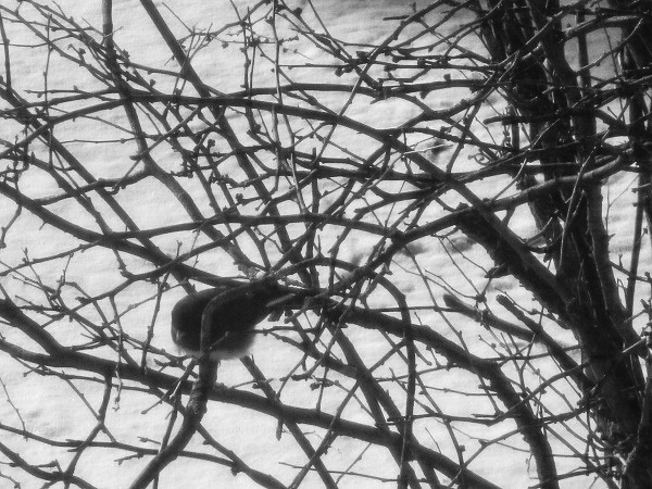 Disgruntled bird in snow, by DG.