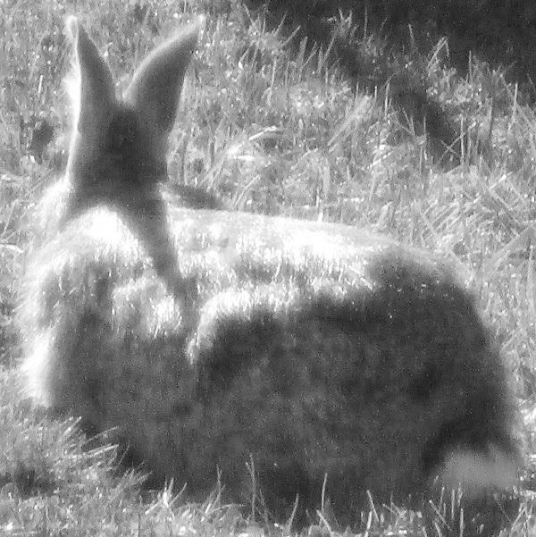Rabbit by DG