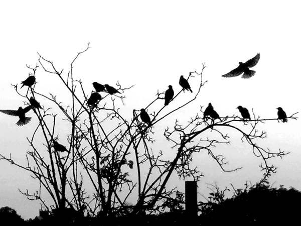 The Birds by Freewayriding