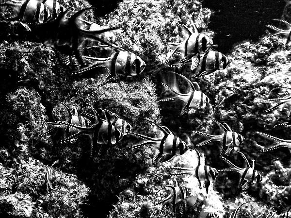 Aquarium by FWR