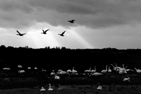 Birds in Flight by FWR