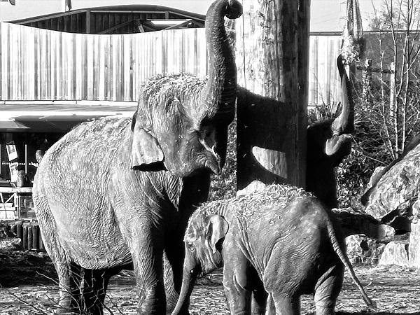Copycat Elephant by Freewayriding