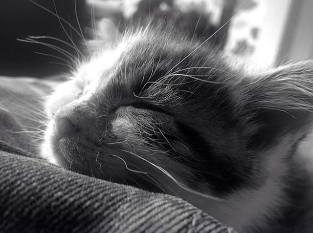 Kitty Resting by Freewayriding