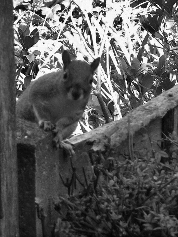 Curious Squirrel by bobstafford