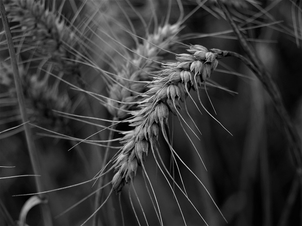 Grain by bobstafford