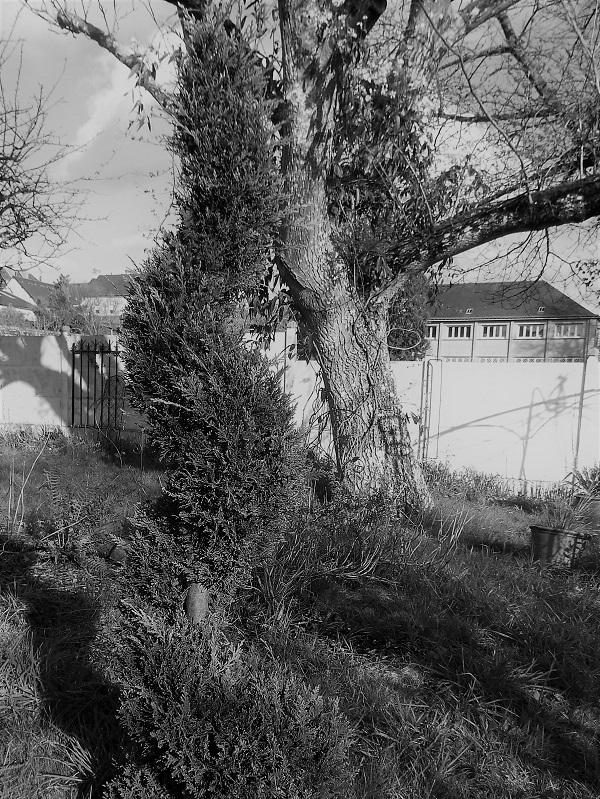 Tree, House, Wall by bobstafford