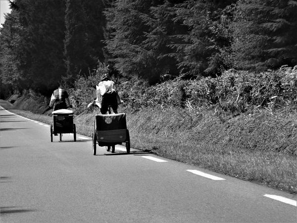 Roadside Sight by bobstafford