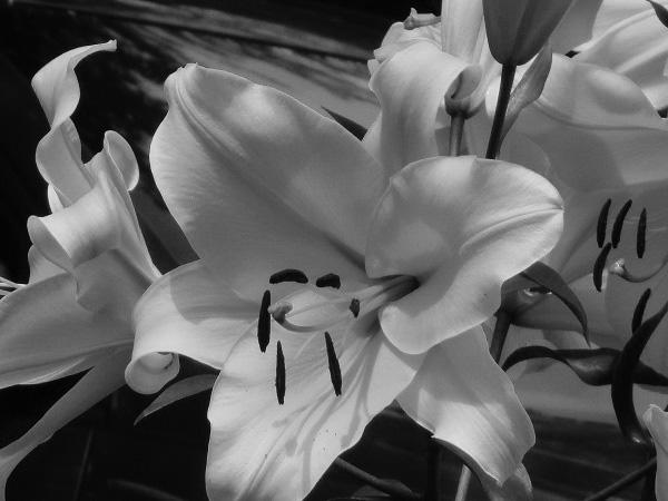 Lilies by Dmitri Gheorgheni