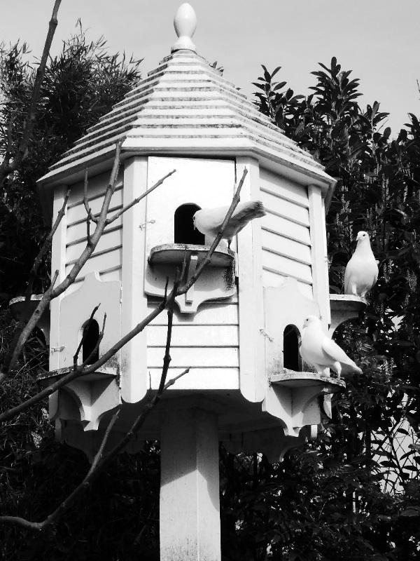 Monochrome Dovecote by Cactuscafe
