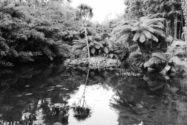 Monochrome Palm Shadow by Cactuscafe