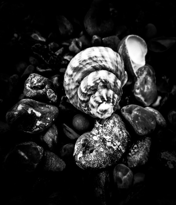 The Other Side of the Shell by Cactuscafe