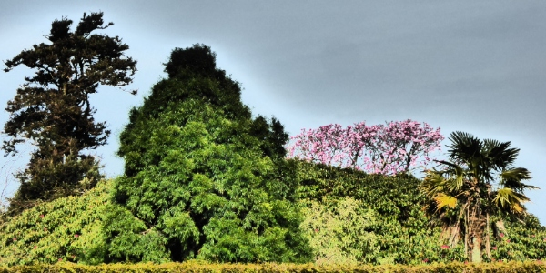 Tree of Heligan by Cactuscafe
