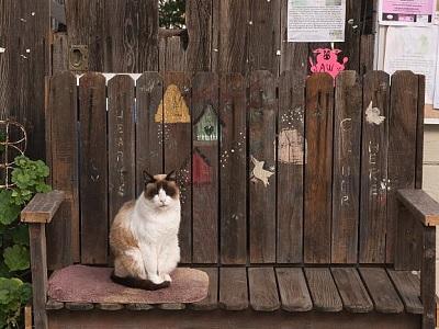 Cat on a park bench by Carol M Highsmith