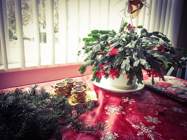 Christmas Cactus by Dmitri Gheorgheni