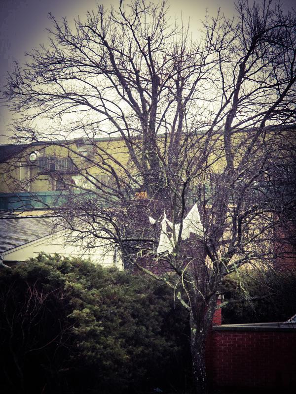 Tree Ghost Behind Post Office
