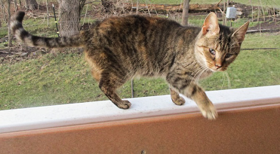 Porch Cat (Action Shot) by Dmitri Gheorgheni