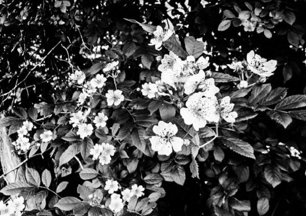Flower Memory by Dmitri Gheorgheni