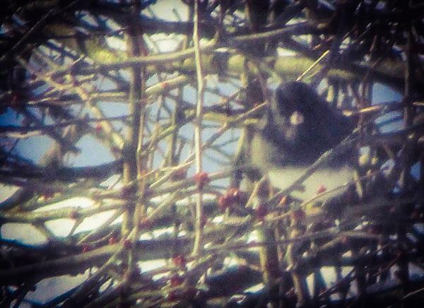 Disgruntled Bird by DG
