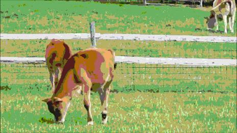 Grazing Calves, by DG.