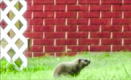 Groundhog by DG.