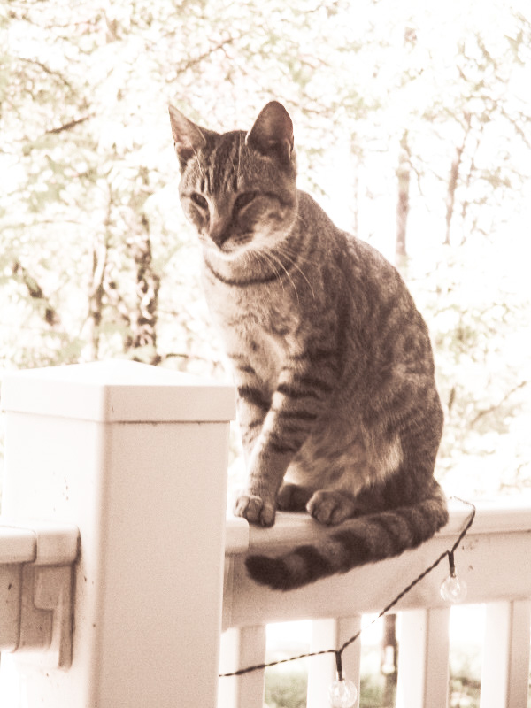 Cat on a porch railing, by DG