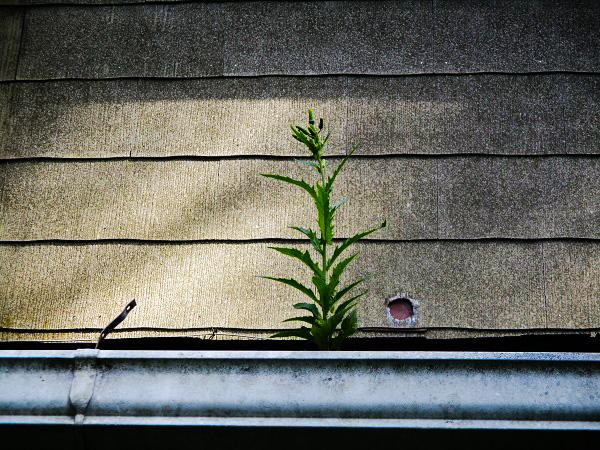 Plant in Rain Gutter by Dmitri Gheorgheni