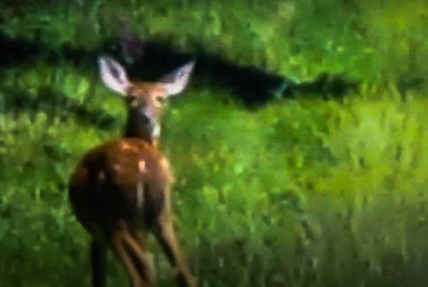 Startled Deer by DG