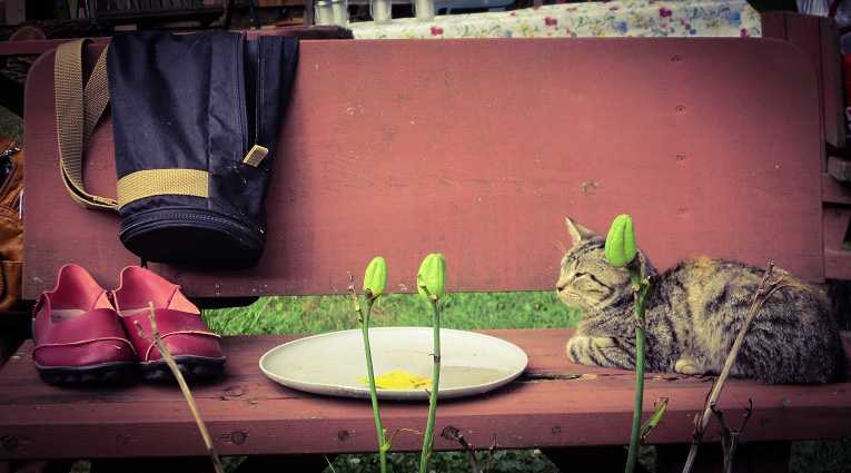 Tableau of tripod bag, red shoes, empty dish, and small cat on a redwood bench, by DG.