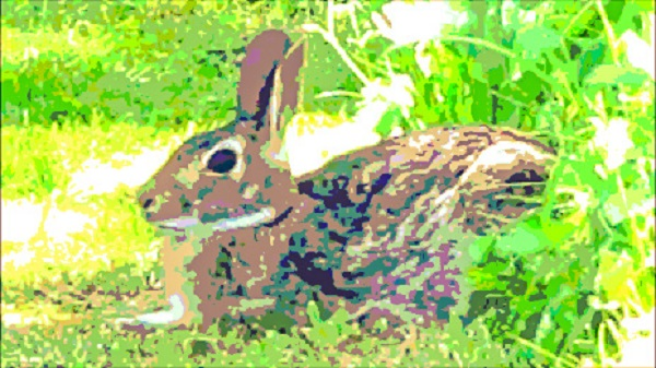 A bunny in the grass.