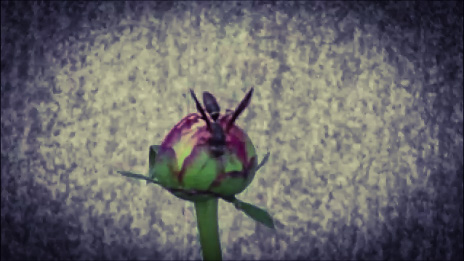 Wasp on Peony by Dmitri Gheorgheni
