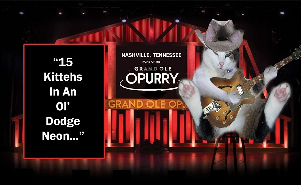 Cats performing music at the Grand Ole Opry, by Freewayriding.
