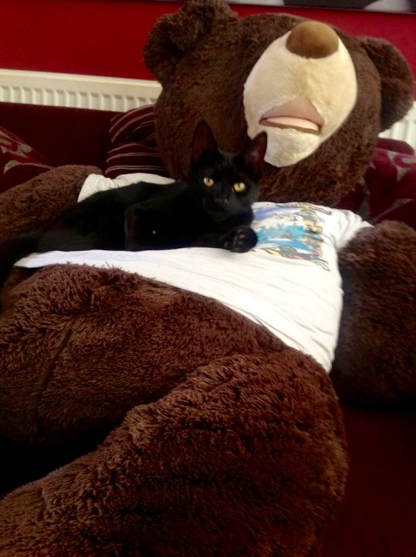 Midnight the Cat lounging on her favourite giant teddy bear by Freewayriding