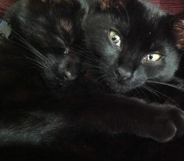 Miss Beanie and Midnight, by FWR .