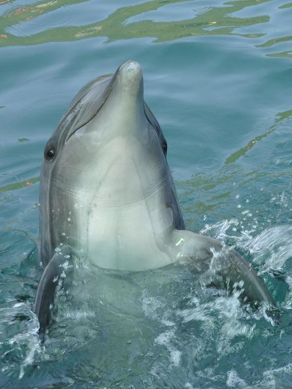 Dolphin by Freewayriding