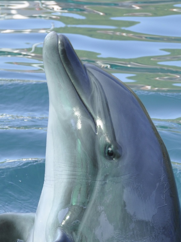 A dolphin FWR swam with