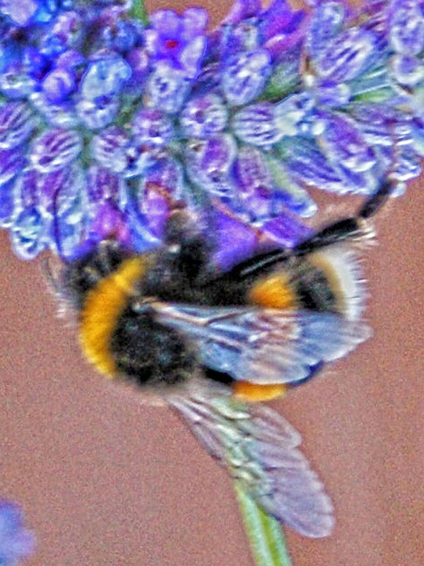 Bee Photography by Freewayriding